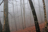 Morning Fog in a Mountain Forest — Stock Photo