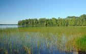 Marsh Grass in the Quetico — Stock Photo
