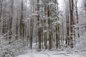 Spring Snow in the Smokies — Stock Photo