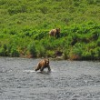 Stok fotoğraf: Two young Bears approaching favorite fishing hole