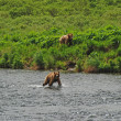 Stock Photo: Two young Bears approaching favorite fishing hole