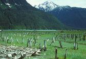 гавань руины на аляске хайдер — Стоковое фото