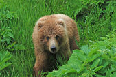 A young Bear in the wilds — Stock Photo