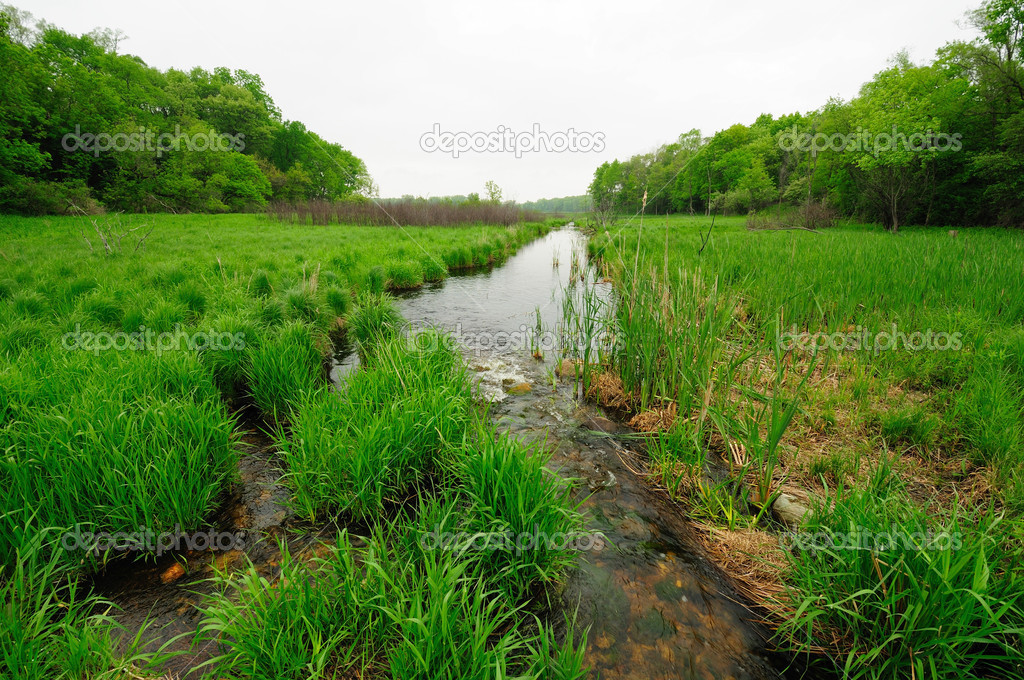 This wetland is found in Moraine hills State Park in illinois — Stock Photo #5751113