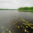 Stock Photo: Lily pads on quiet Lake
