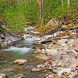 Mountain stream in the spring — Stock Photo #5844169