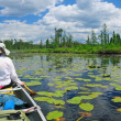 Stock Photo: Paddling through lily pads
