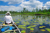 Paddling through the lily pads — Stock Photo