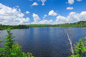 A summer day in Canoe Country — Stock Photo