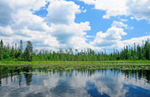 Reflections in the North Woods — Stock Photo