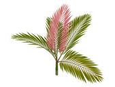 Red leaf Palm or Chambeyronia macrocarpa — Stock Photo