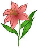 Flower lily — Wektor stockowy
