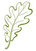 Leaf of oak tree, vector — Stock Vector