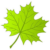Leaf of a maple, vector — Stock Vector