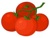 Tomatoes — Stock Vector