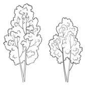 Contorno de folha caduca, árvores — Vetorial Stock