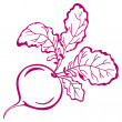 Radish with leaves, pictogram - Stock Photo