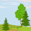 Landscape. Trees on hill - Stockfoto