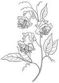 Flower kobe, contours — Stock Vector