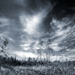 Dark forest with dramatic sky — Stock fotografie
