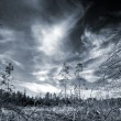 Dark forest with dramatic sky - Stock Photo