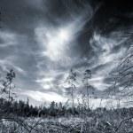 劇的な空と暗い森 — ストック写真