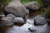 Coast of a small stream — Stock Photo