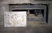 Black street cat — Stock Photo