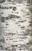 Birch bark — Stock Photo