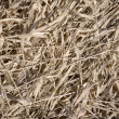 Close-up hay background texture — Stock Photo