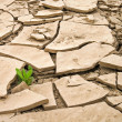 Wild plant growing in a cracked dry ground - Stock Photo