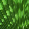 Palm Leaf — Stock Photo #6277619