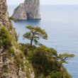Coast of Capri Island - 图库照片
