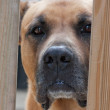 Dog keeping home - Stockfoto