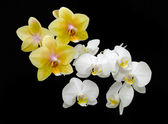 Bouquet of yellow and white orchids on a black background — Stock Photo