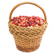 Royalty-Free Stock Photo: Cranberries in the basket