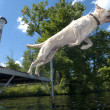 Jumping Dog — Stock Photo #6082425