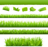 Green Grass And Leafs Set — Stock Vector