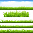 Green Grass And Leafs Set — Stock Vector #6279418