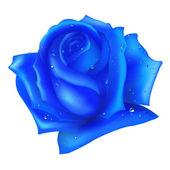 Blue Rose — Stock Vector