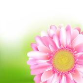Belleza rosa gerber — Vector de stock