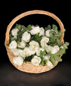 White roses lie to a basket — Stock Photo