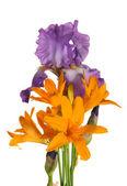 букет из лилий и ирис — Стоковое фото