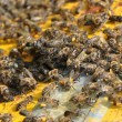 Stock Photo: Plenty with bees