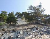 Pines op rotsen — Stockfoto