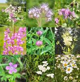 Fältet blommor — Stockfoto