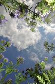 Nuages à travers une herbe — Photo
