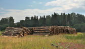 The cut logs — Stock Photo