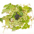 Stock Photo: Grapes and black mountain ash