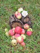 äpplen i en gräs på påbörjad — Stockfoto